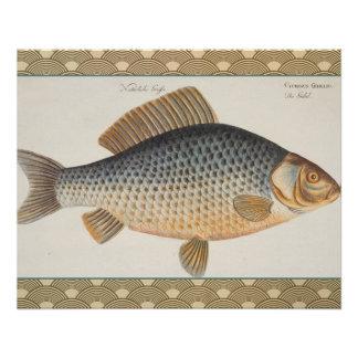 Vintage Carp Freshwater Fish Drawing Poster