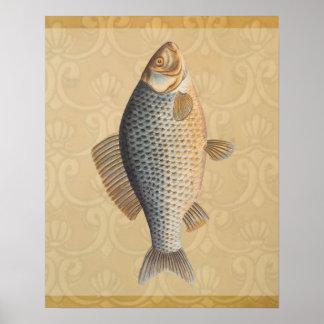 Vintage Carp Freshwater Fish Drawing Posters