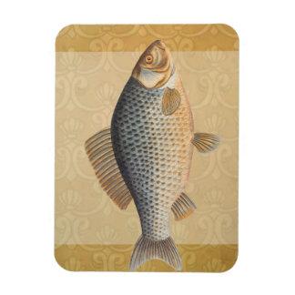 Vintage Carp Freshwater Fish Drawing Rectangular Photo Magnet