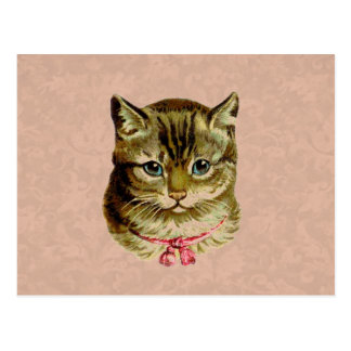 Vintage Cat with Pink Bow on Pink Damask Postcard