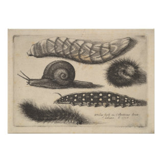 Vintage Caterpillar Snail Insect Nature Print (56) at Zazzle
