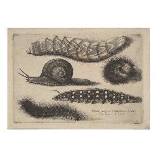 Vintage Caterpillar Snail Insect Nature Print (56)