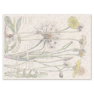 Vintage Cats Ear Wildflower Flowers Tissue Paper