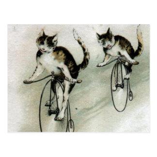 Vintage Cats on Bikes Postcard