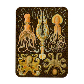 Vintage Cephalopods Squid Octopus Rectangular Photo Magnet