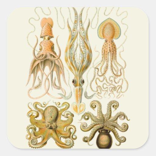 Vintage Cephalopods Sticker