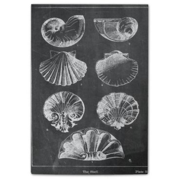 Beach Themed vintage chalkboard beach french country seashells post-it notes