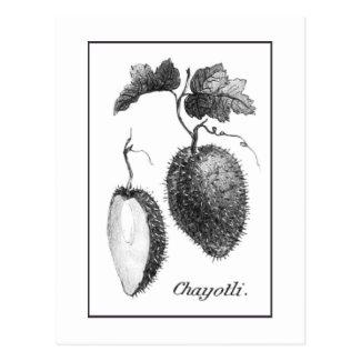 Vintage chayote etching card