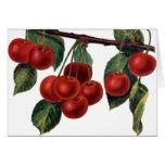Vintage Cherries Card