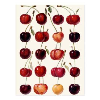 Vintage Cherries Postcard