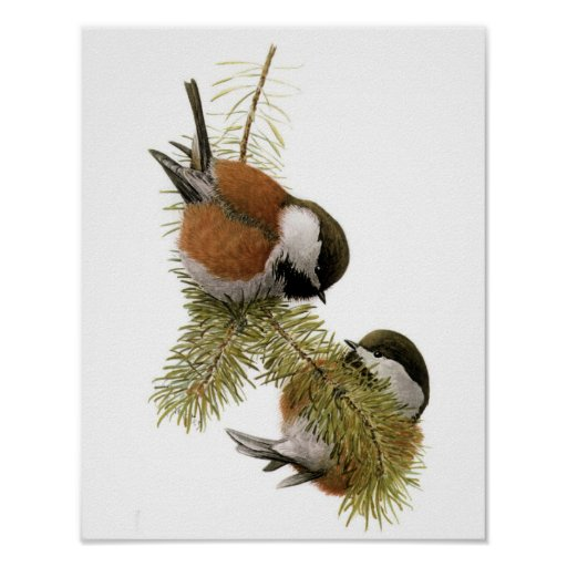 Vintage Chestnut-backed Chickadee Poster