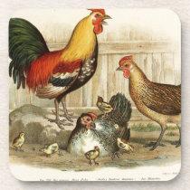 Vintage Chicken family illustration Drink Coaster