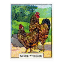 Vintage Chicken Print Postcard