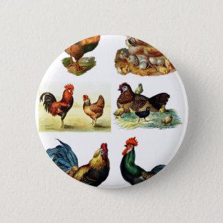 vintage chickens design pinback button