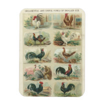 Vintage Chickens Magnet