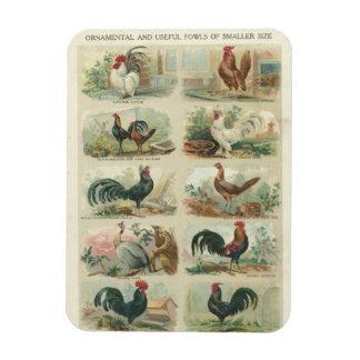 Vintage Chickens Rectangular Photo Magnet