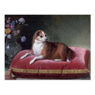 Vintage Chihuahua Portrait Postcard