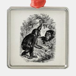Vintage Chimpanzees 1800s Monkey Chimp Template Square Metal Christmas Ornament