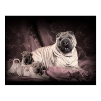 Vintage Chinese Shar Pei Wrinkles, Puppy Dogs Post Card