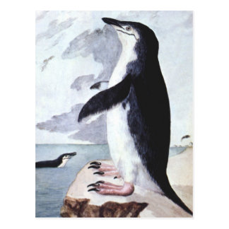 Vintage Chinstrap Penguin, Birds from Antarctica Postcard