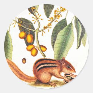 Vintage Chipmunk Illustration Classic Round Sticker