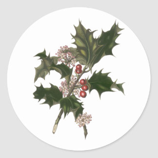Vintage Christmas, Green Holly Plant with Berries Classic Round Sticker