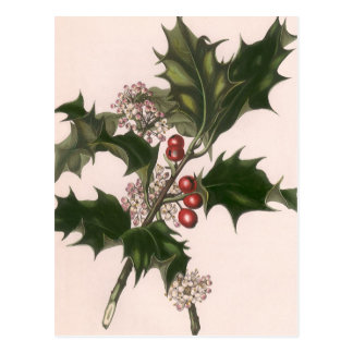 Vintage Christmas, Holly and Berries Postcards