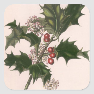 Vintage Christmas Holly and Berries Square Sticker