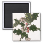 Vintage Christmas, Holly Plant with Red Berries 2 Inch Square Magnet