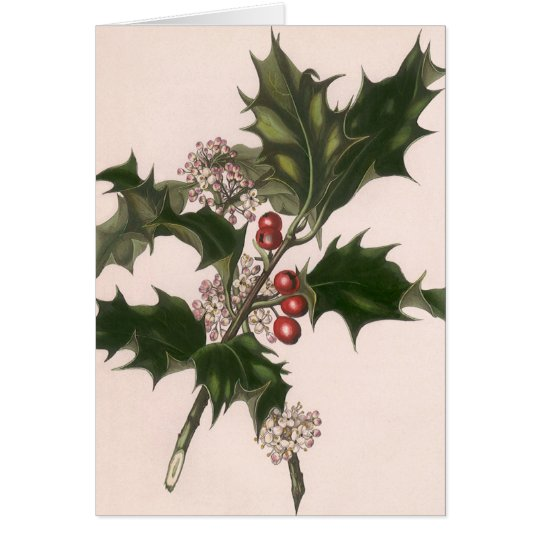 Vintage Christmas, Holly Plant with Red Berries Card