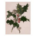 Vintage Christmas, Holly Plant with Red Berries Poster