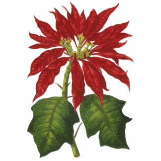 Vintage Christmas Red Poinsettia Photo Cut Out