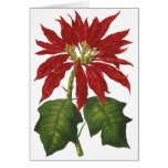Vintage Christmas, Red Poinsettia Winter Plant Card