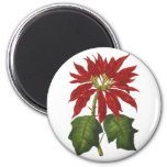Vintage Christmas, Red Poinsettia Winter Plant Refrigerator Magnet