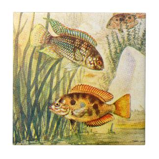 Vintage Cichlid Fish Ceramic Tile