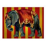 vintage circus elephant postcard