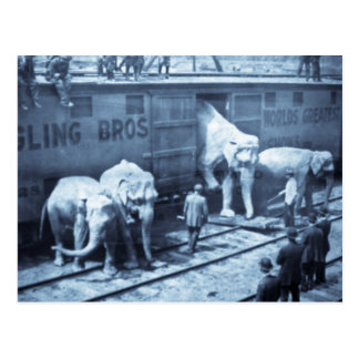 Vintage Circus Elephants Ringling Railroad Car Postcard