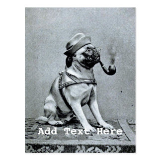 Vintage Classy Pug Photograph Postcard