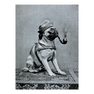 Vintage Classy Pug Photograph Posters