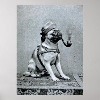 Vintage Classy Pug Photograph Poster