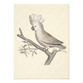 Vintage Cockatoo Parrot Card