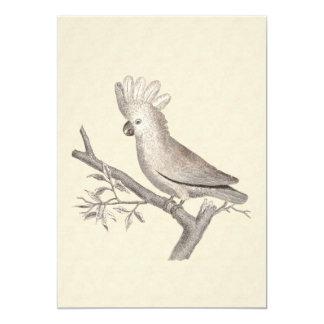 Vintage Cockatoo Parrot 5x7 Paper Invitation Card