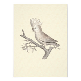 Vintage Cockatoo Parrot 5.5x7.5 Paper Invitation Card