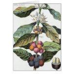 Vintage Coffee bean Artwork Card