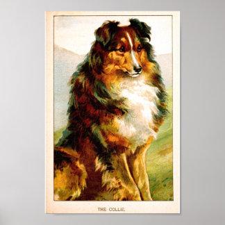 VIntage Collie Dog Poster