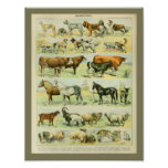 Vintage Color Farm Animals Print