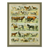 Vintage Color Farm Animals Print