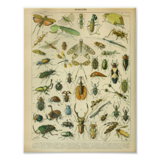 Vintage Color Insect Art Print