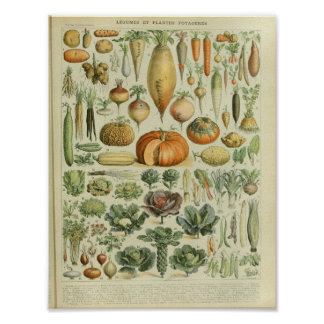 Vintage Color Vegetable Art Print