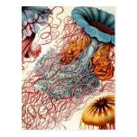 Vintage Colorful Jellyfish Postcard